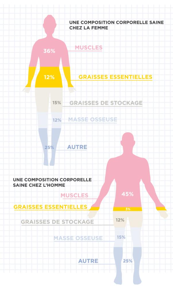 Composition corporelle des femmes et des hommes
